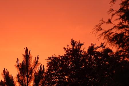Hot_pink_sky
