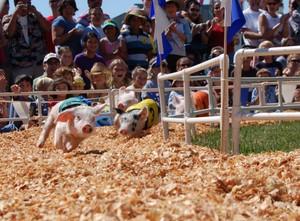 Pig_race